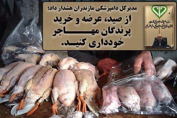 هشدار دامپزشکی به مردم ، از خرید لاشه پرندگان مهاجر خودداری کنید