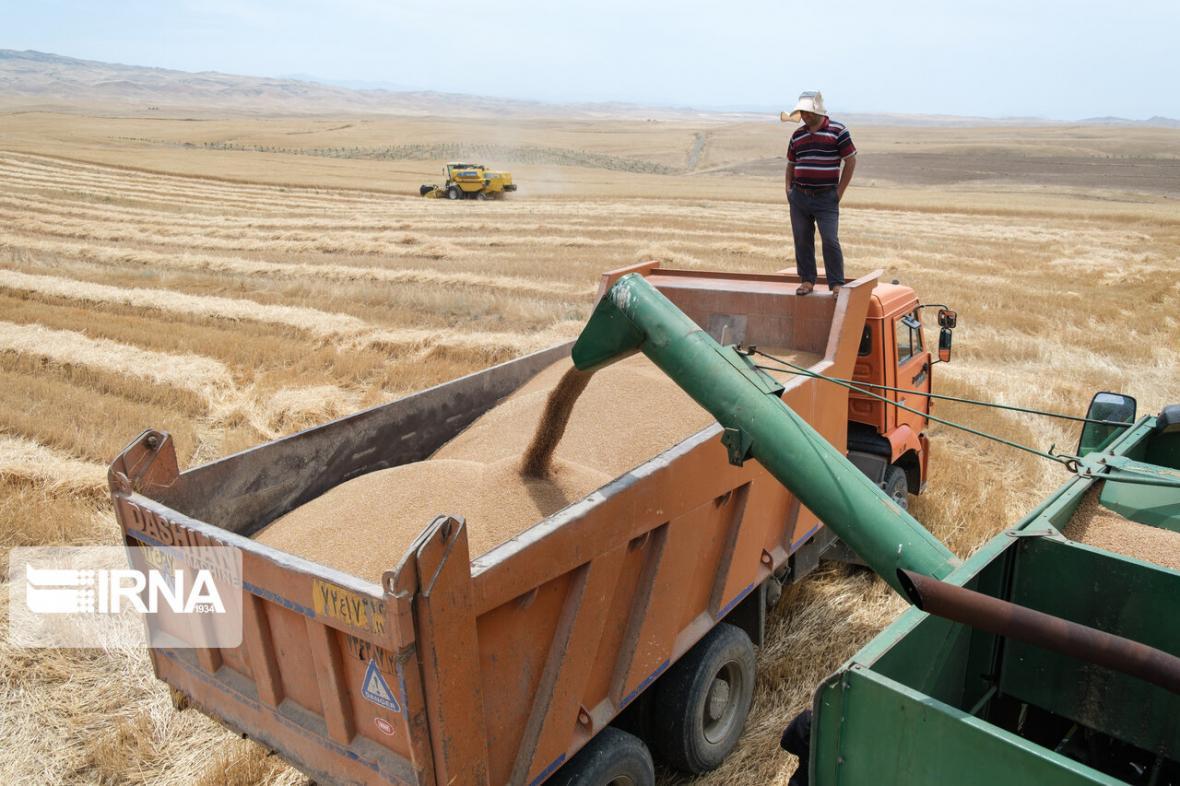 خبرنگاران 340 هزار تن گندم تولیدی شرق گلستان به مراکز خرید تحویل شد