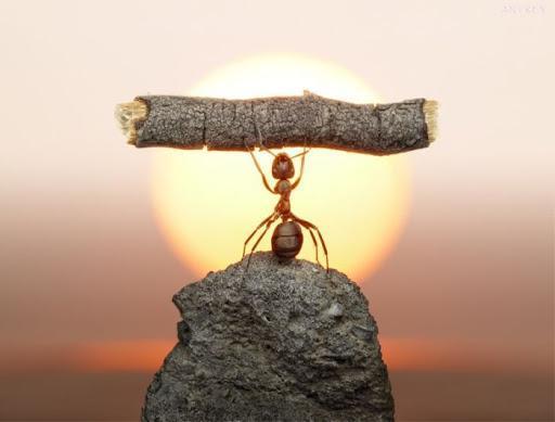 چرا مورچه ها هنگام سقوط کردن آسیب نمی بینند؟ ، فیزیک پاسخ می دهد
