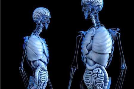 ترمیم استخوان با پروتز احیاکننده