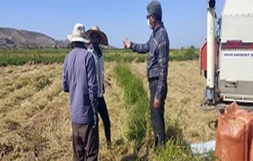 شروع برداشت مکانیزه برنج درشهرستان ?خداآفرین برداشت 2500 تن برنج از اراضی شهرستان خداآفرین